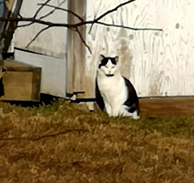 Oreo, Jordantown - successful TNR to a feral colony!