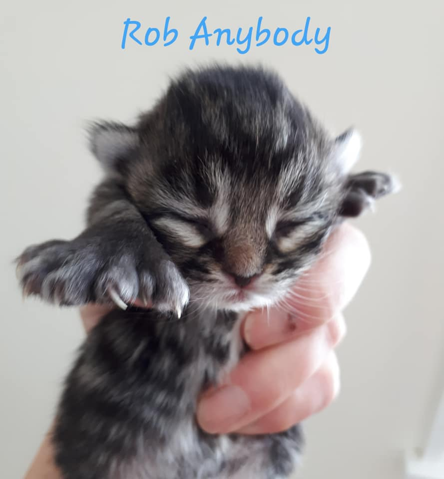 Rob Anybody, Bear River – currently in foster care