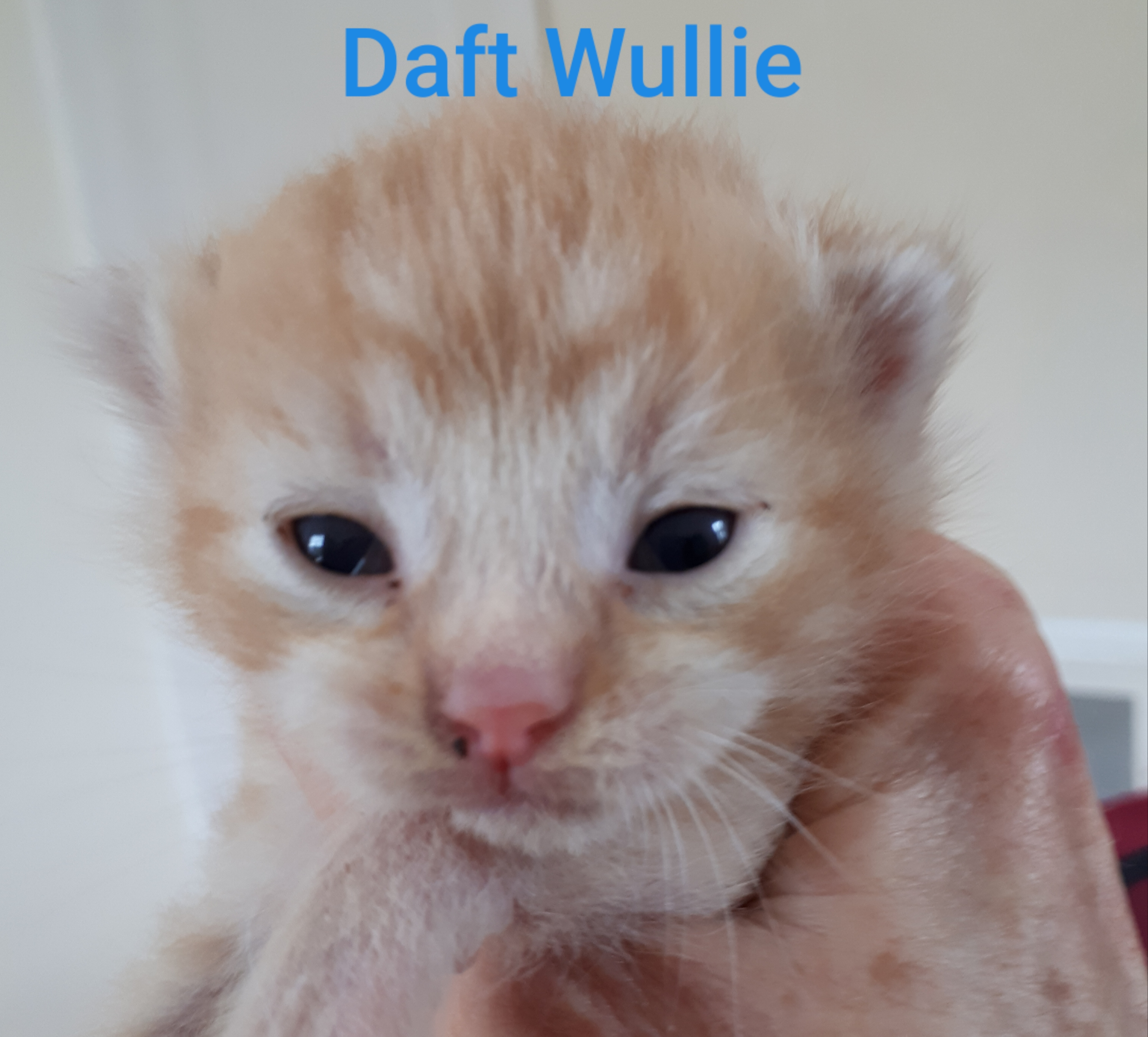 Daft Wullie, Bear River – currently in foster care