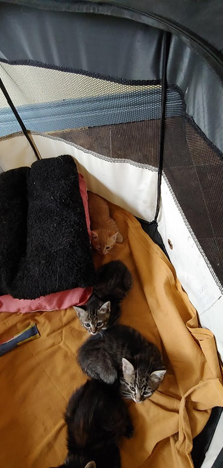 4 kittens, Culloden – currently in foster care