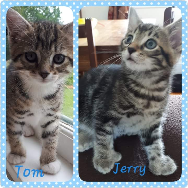 Tom and Jerry, Culloden – adopted through Tantallon Veterinary Hospital