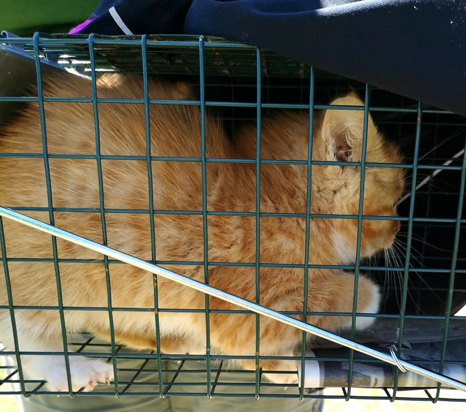 Pumpkin, Plympton – currently in foster care