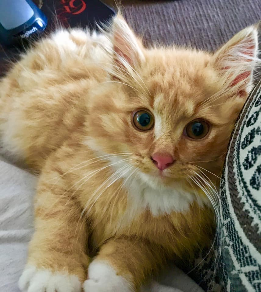 Nugget, Plympton - currently in foster care