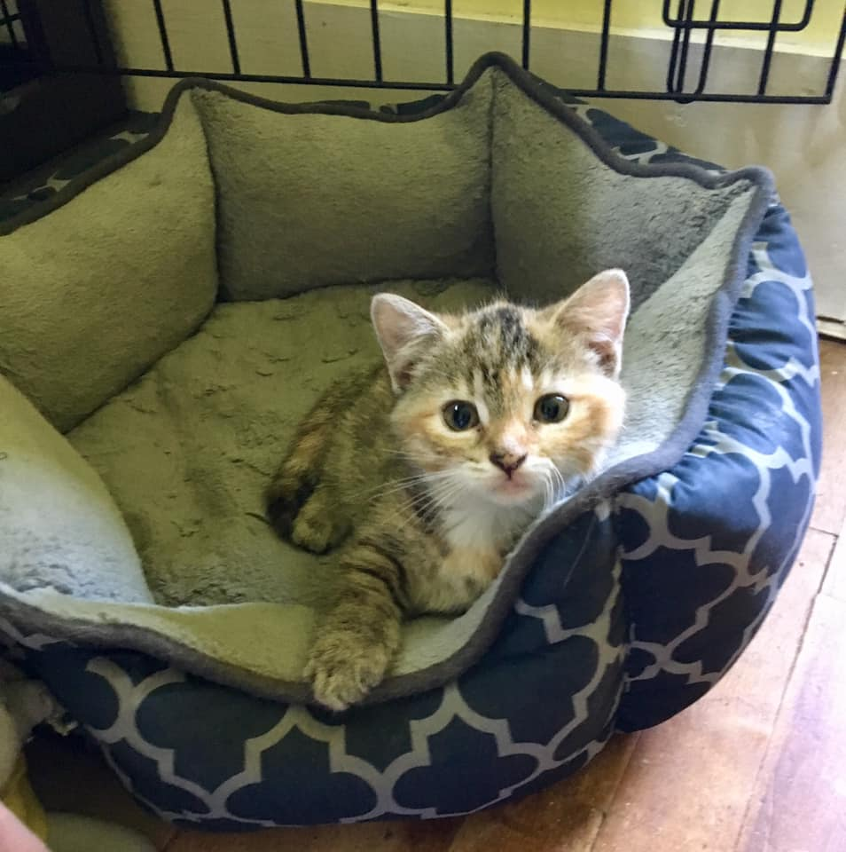 Prim, Marshalltown – currently in foster care