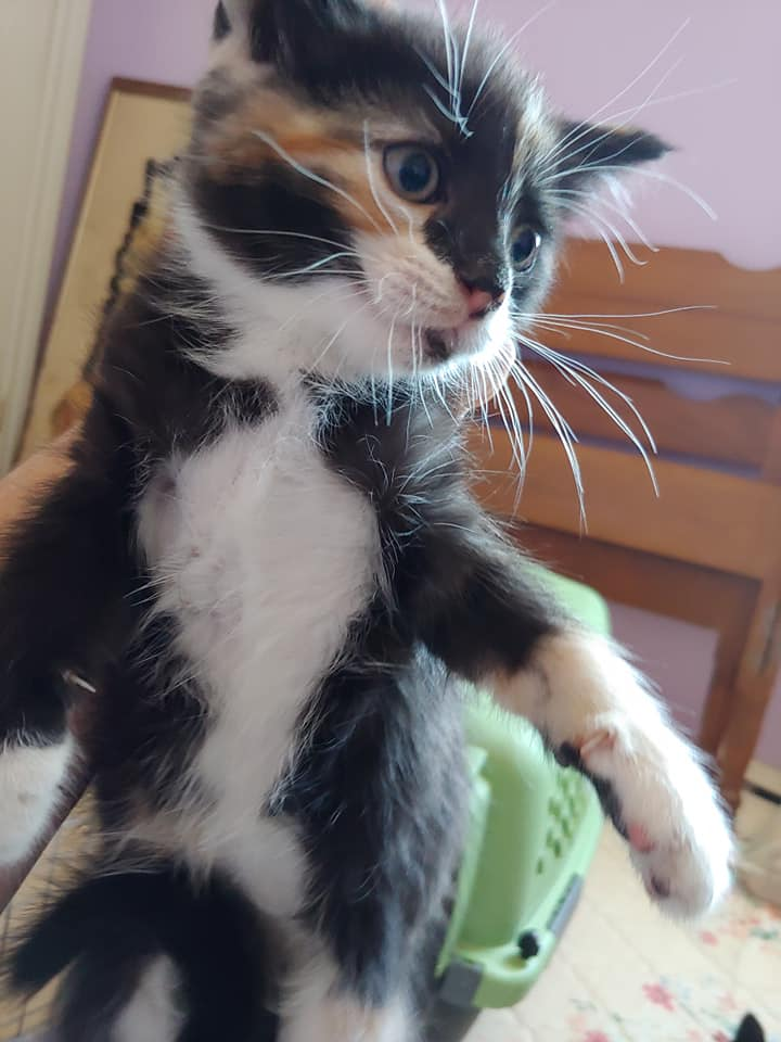 Butterscotch, Weymouth – currently in foster care