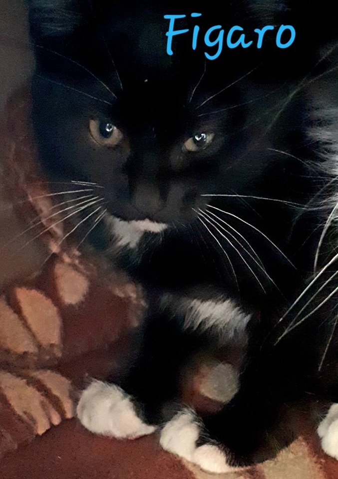 """Figaro, now """"Festus"""", Roxville – adopted!"""