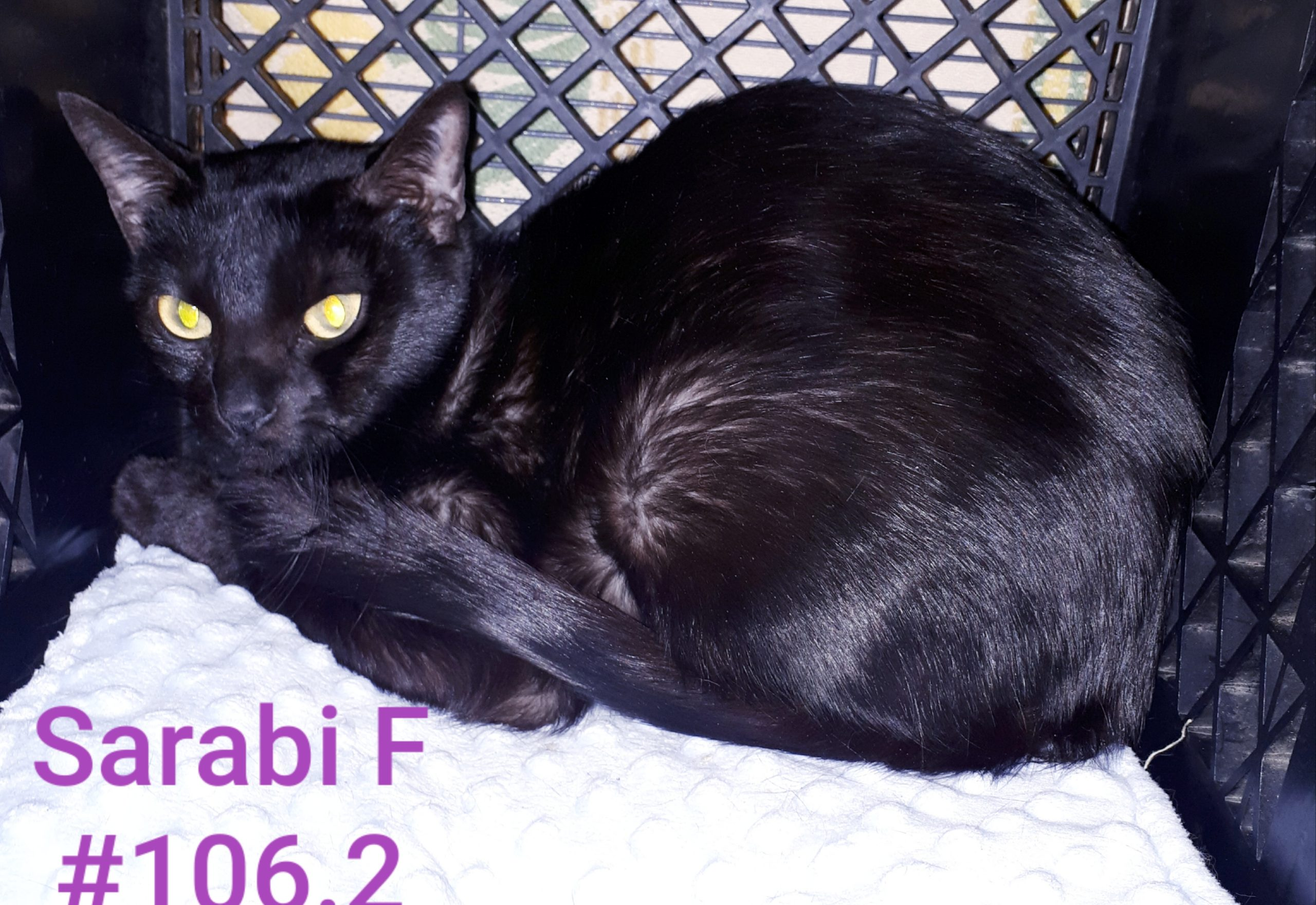 Sarabi, Digby – currently in foster care