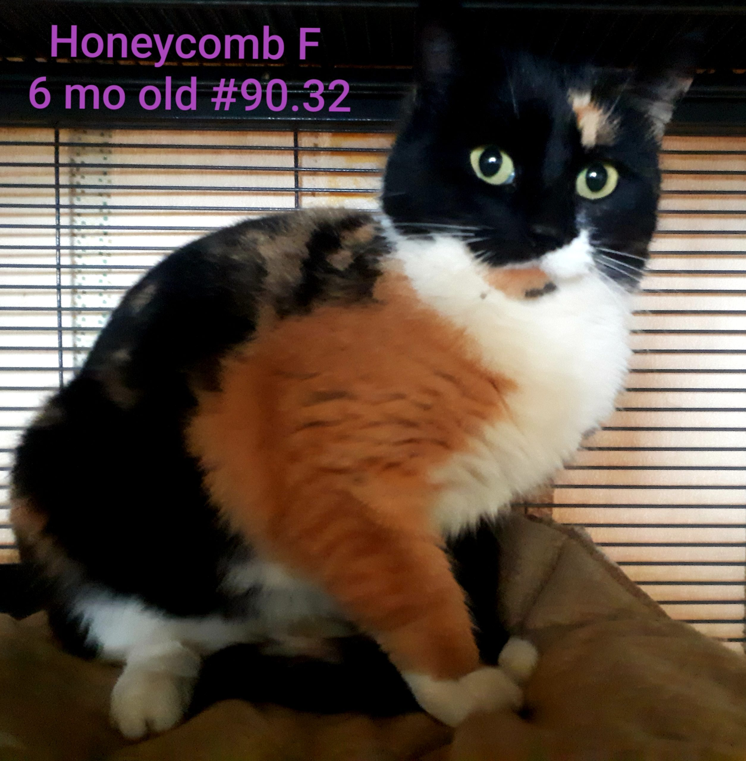 Honeycomb, Digby – currently in foster care