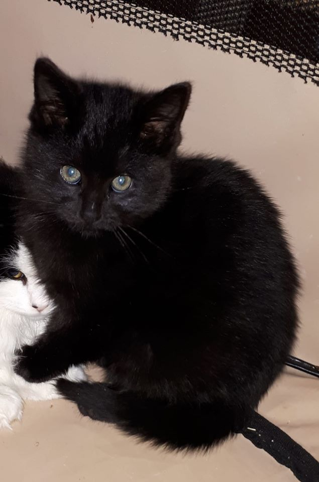 Mr Mistoffeles, Marshalltown – adopted through Tantallon