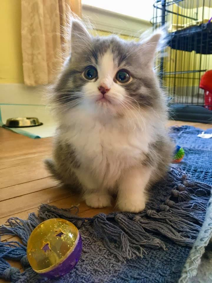 Pepper, Digby – currently in foster care