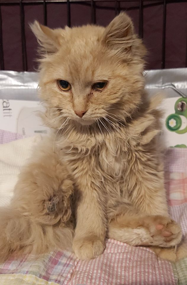 Hunny, Bear River – currently in foster care
