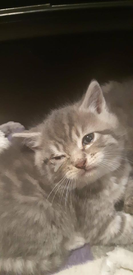 Kitten, Plympton – currently in foster care