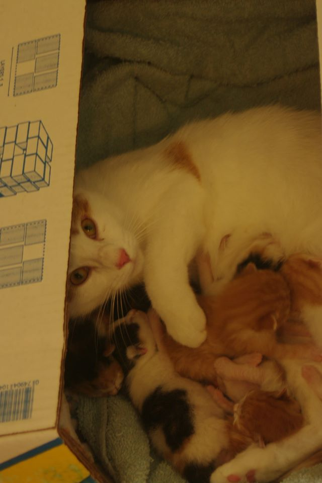 Cheeto and her 6 kittens, Digby – in foster care