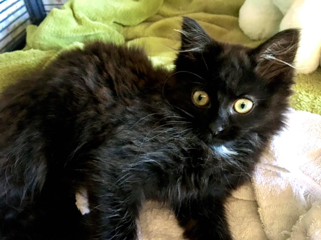 Dorothy, Roxville – adopted!