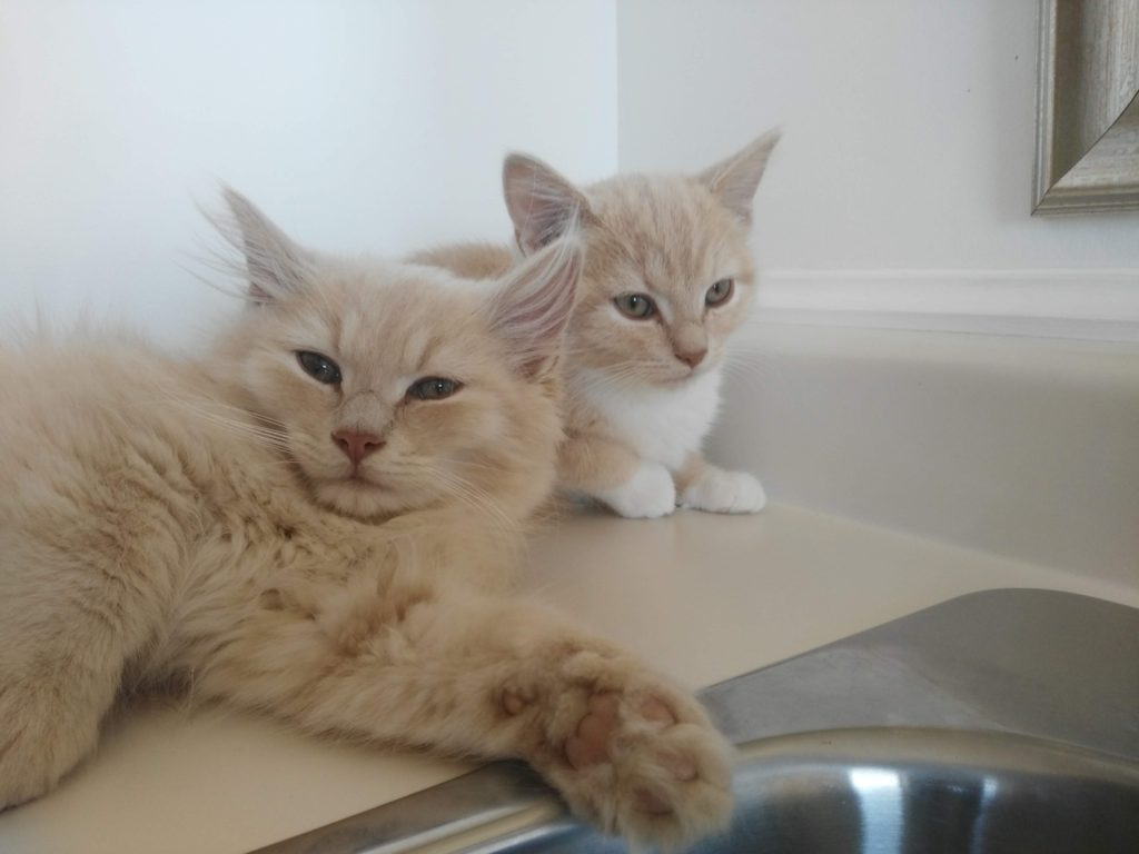 Fluffy and Peach, Digby – in foster care