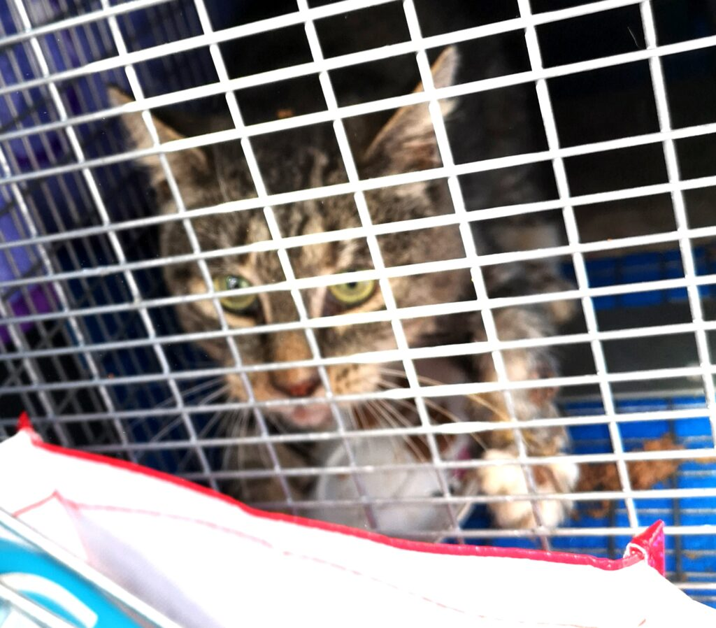 Kitty, Digby – severely ill; passed away :(((