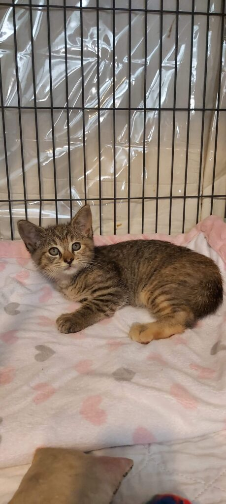 Bediliah, Digby – in foster care