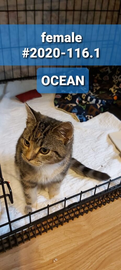Ocean, Digby – in foster care