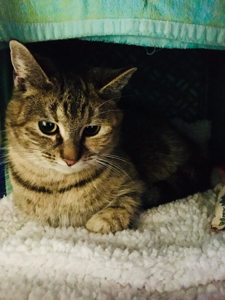 Olive – adopted!