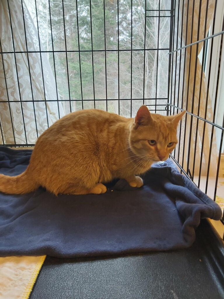 Ginger – adopted!