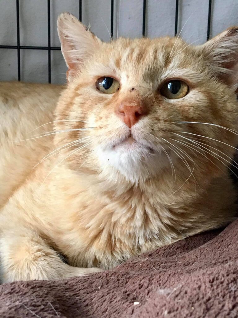 Magnus – adopted to a barn home