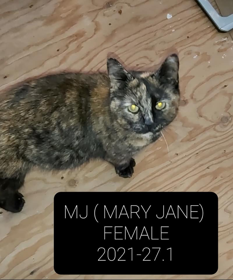 MJ (Mary Jane) – in foster care