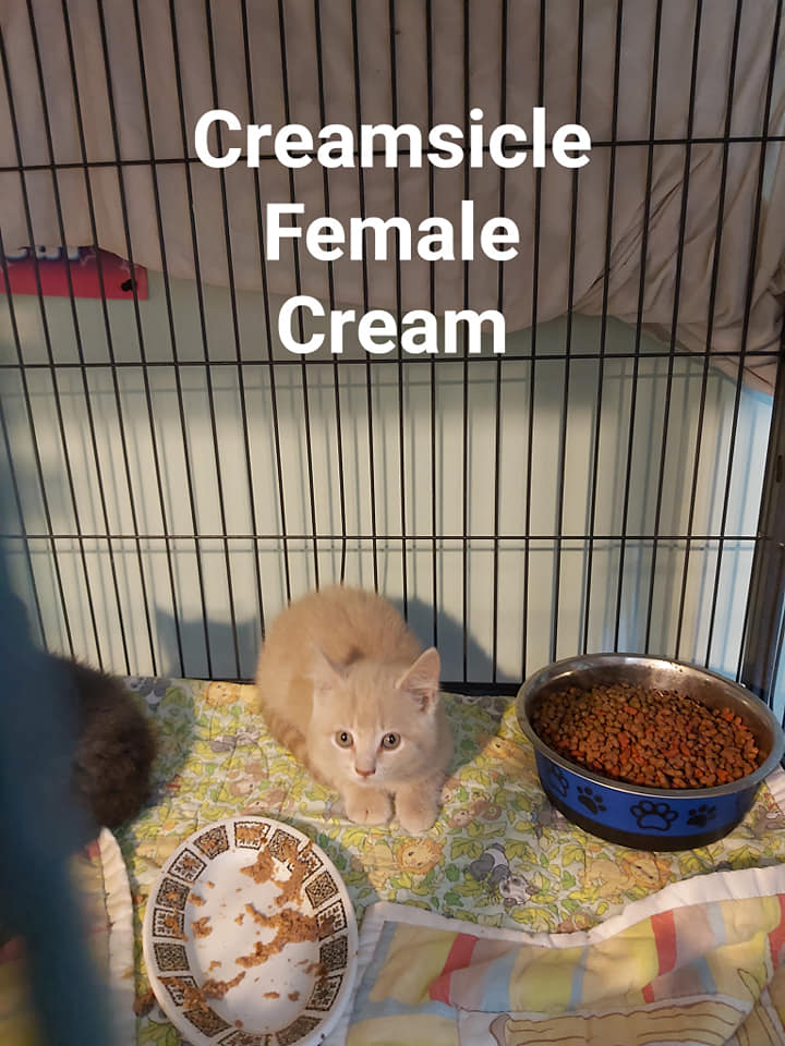 Creamsicle – in foster care