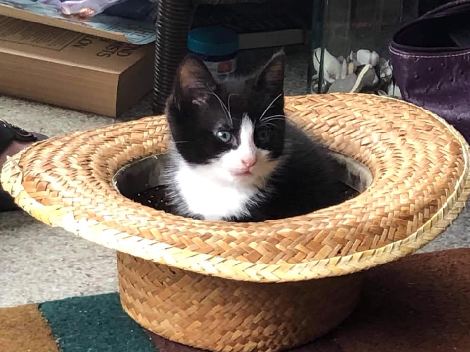 Shanty – adopted!