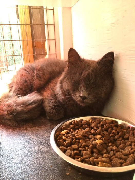 Smokey – in foster care