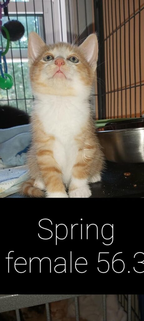 Spring – in foster care