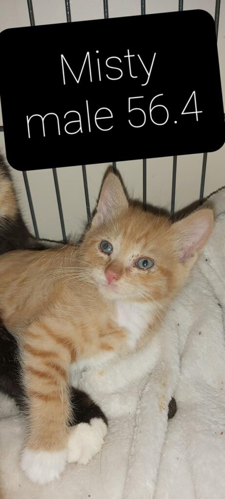 Misty – in foster care