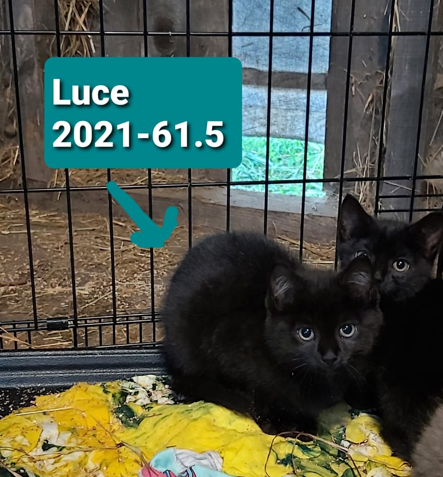 Luce – in foster care